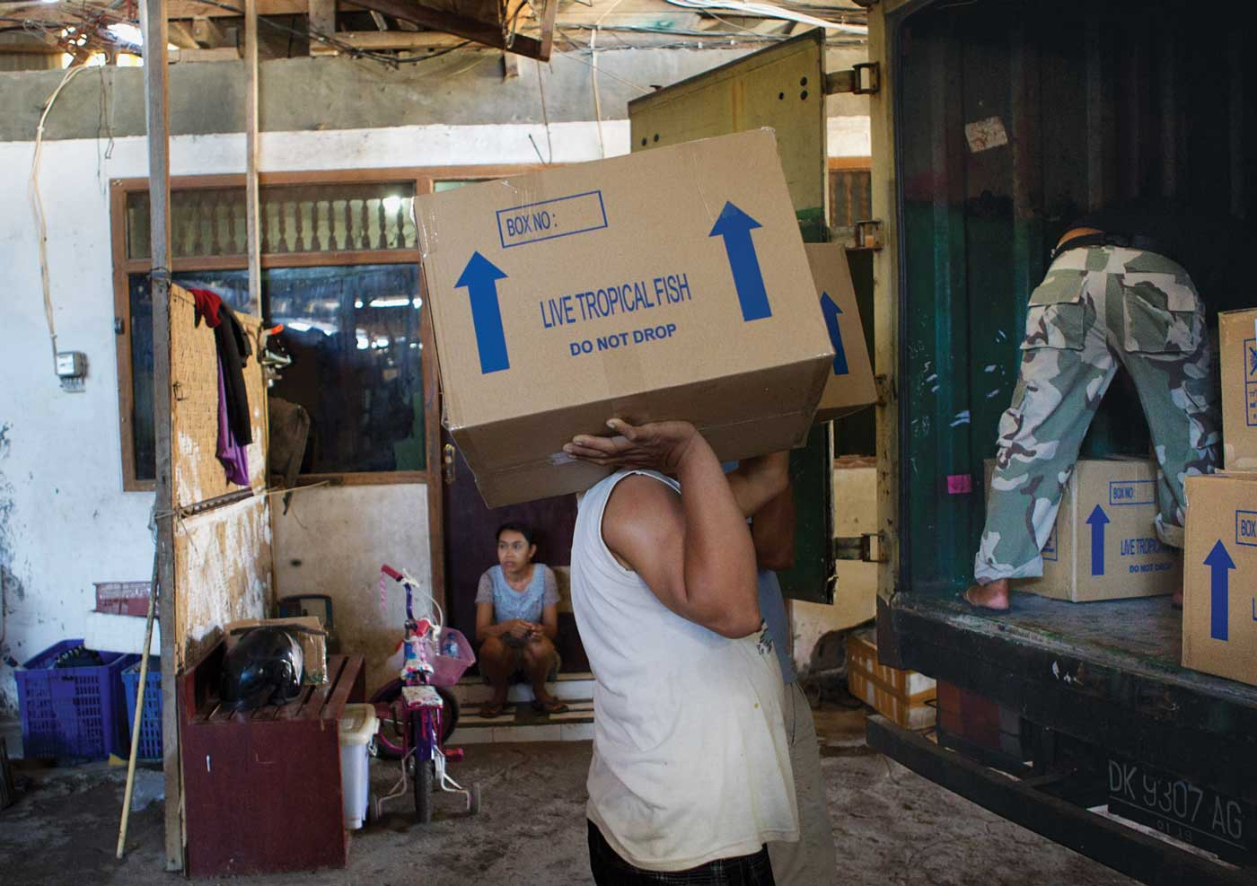 A man carries two boxes, one on each shoulder, supported by his hand, which read 'Live Tropical Fish. Do Not Drop.' He approaches a truck where someone is stacking identical boxes. In the background, a woman sits on the step of a home.
